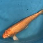 Fisch7