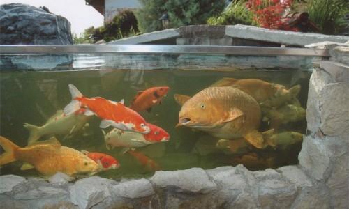 Fischhaltung for Moderlieschen haltung