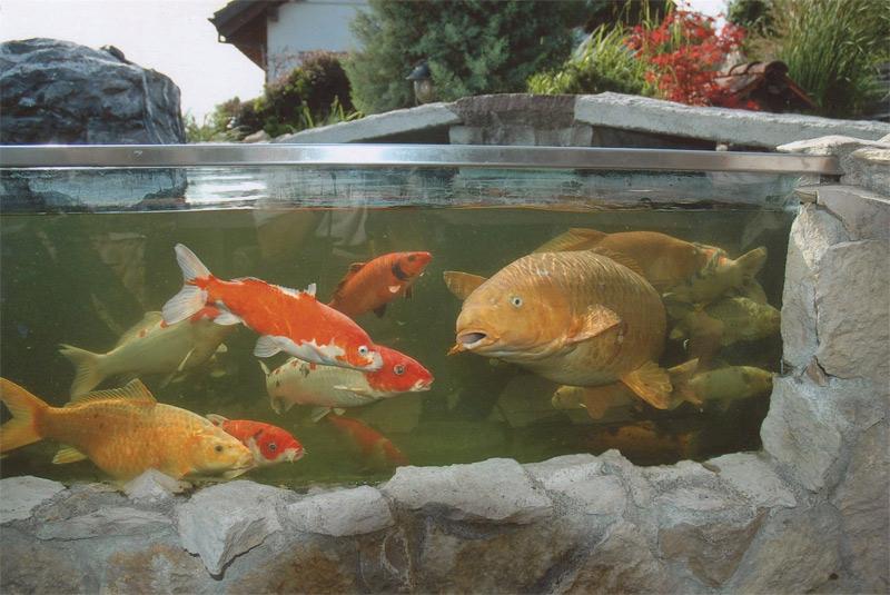 Fischhaltung for Fischhaltung im teich